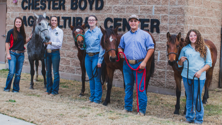 WATCH | CBS 11 Features LISD's FFA Mustang Program