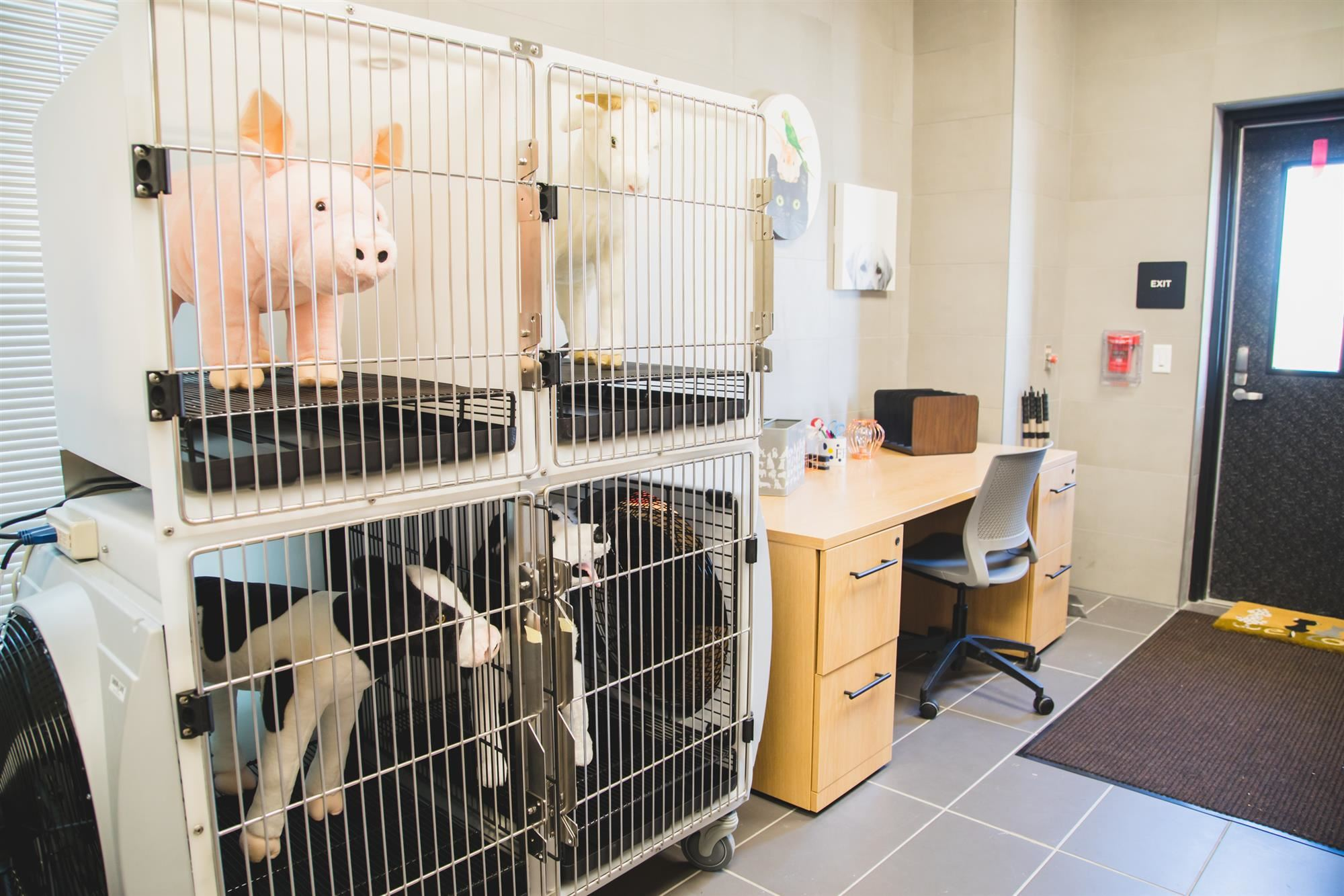 Toy animals in veterinary kennels