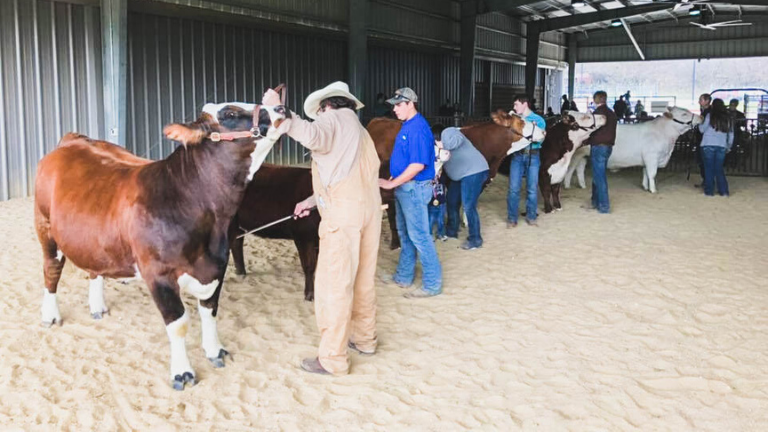 LISD FFA Hosts 40th Annual Show