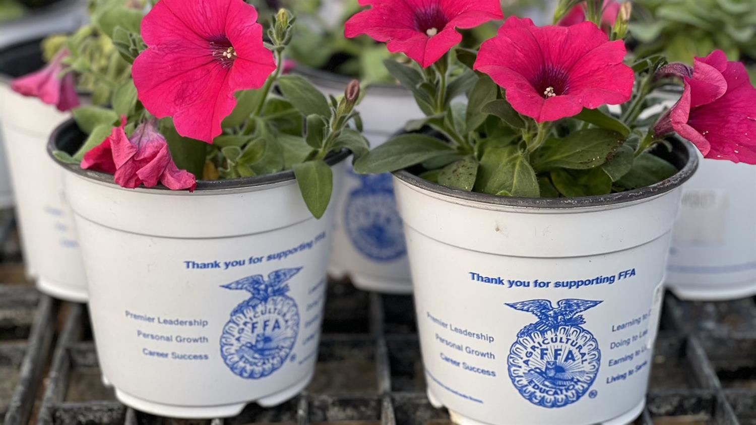 TECC-W Horticulture Students and Lewisville FFA Host Plant Sale